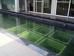 Glass Bottom Swimming Pool...