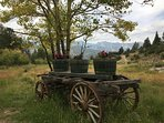 Antique wagon is a great place to take pictures.