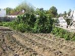 Nuestro huerto, completamente ecologico