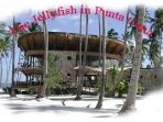 Jellyfish Beach Club - 15 minutes away with our FREE shuttle service