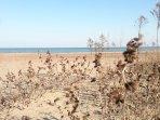 Deep sandy beach, Bluffers Park (East side)