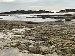 Some water play for everyone right at the footstep: tide pools, natural swim holes