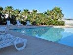 Palm Tree,Tree,Pool,Resort,Swimming Pool