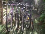 \selection of adult & child bikes available.