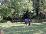 The paddock at Sweet Apples Barn