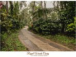 Royal Woods Coorg Gift yourself an heavenly Getaway