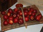 Orchard Harvest, traditional cyder apples: Kingston Black & Tremmels Bitter.