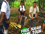 Free Sugar Cane & Farming Tour