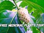 Free medicinal plants tour
