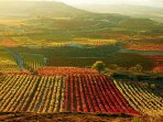 Espectaculares vistas de un viñedo