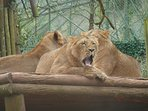Paignton Zoo - just one of dozens of visitor attractions that are open all year round.