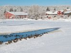 Deschutes River in Wintertime