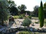 Massif Jardin Chacusse
