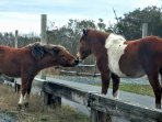They may look cute but  PLEASE respect these beautiful creatures..Do not pet or feed the ponies