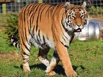 The famous Isle of Wight Zoo is a short stroll from your chalet along the sea front.