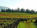 Scenic Cherry Hill vineyard is an easy drive for lunch nearby.