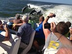 RIDE ON THE 'THRILLER' FOLLOWED BY SCORES OF DOLPHINS!