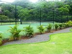 Newly resurfaced tennis court and new fence surrounded by areca palms (when mature).