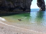 Dogs cooling off at Durdle Door