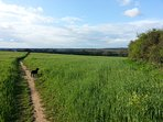 Miles of inland countryside walks