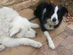fur kids love the secure backyard
