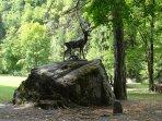 Le cerf du Parc Thermale