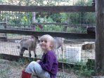 Goat kids are a big hit with the young people!