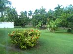 Grounds of our villa which has indigenous fruits and flowers.