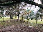 Swing Amongst the Oaks