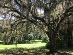Oak Abundance