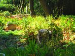 Wild section of Garden with Red Squirrels