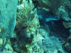 Lots to see when diving in Roatan!!