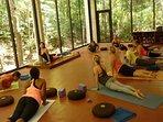 Free Morning Yoga 6 days a week