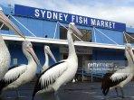 Fish Market located 400 meters away - comfortable 4 minute walk