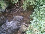 Babbling brook close by