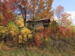 Privacy and spectacular fall color