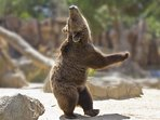 Bear Dance awaits you!