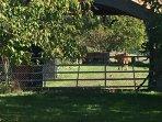 Rear garden and farm next door