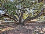 Find comfort under the shade of the large oak trees.