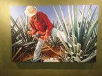 Tequila is made out of the plant agave.