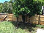 Fully fenced back yard