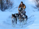 Possibility of dog sled rides