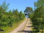 Tree lined driveway to 'Birch Lane'