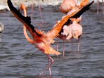 Not in my garden, but you can see Flamingo's on Bonaire.