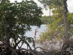 View over Mangrove forest from Crab Shack