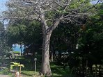 Baobab tree in the garden