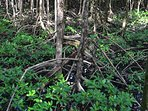 Wild and wonderful mangroves