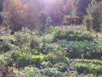 the organic vegetable garden and the kitchen at the back