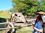 Feed the giraffes at the Living Zoo