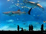 Cairns-Aquarium-accommodation-Trinity-Beach-Getaway
